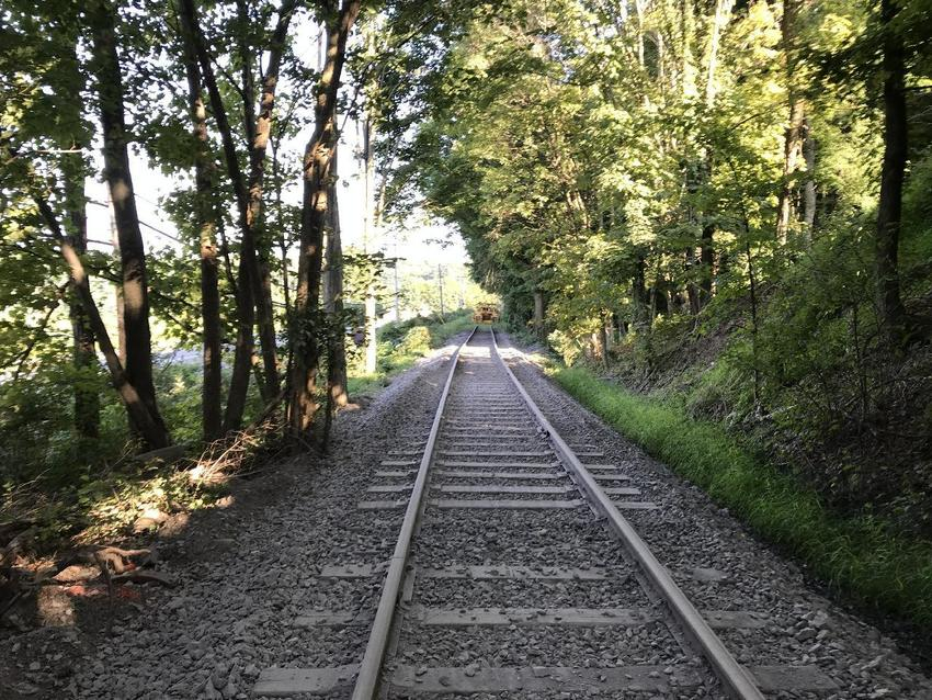 Empty train tracks in forest