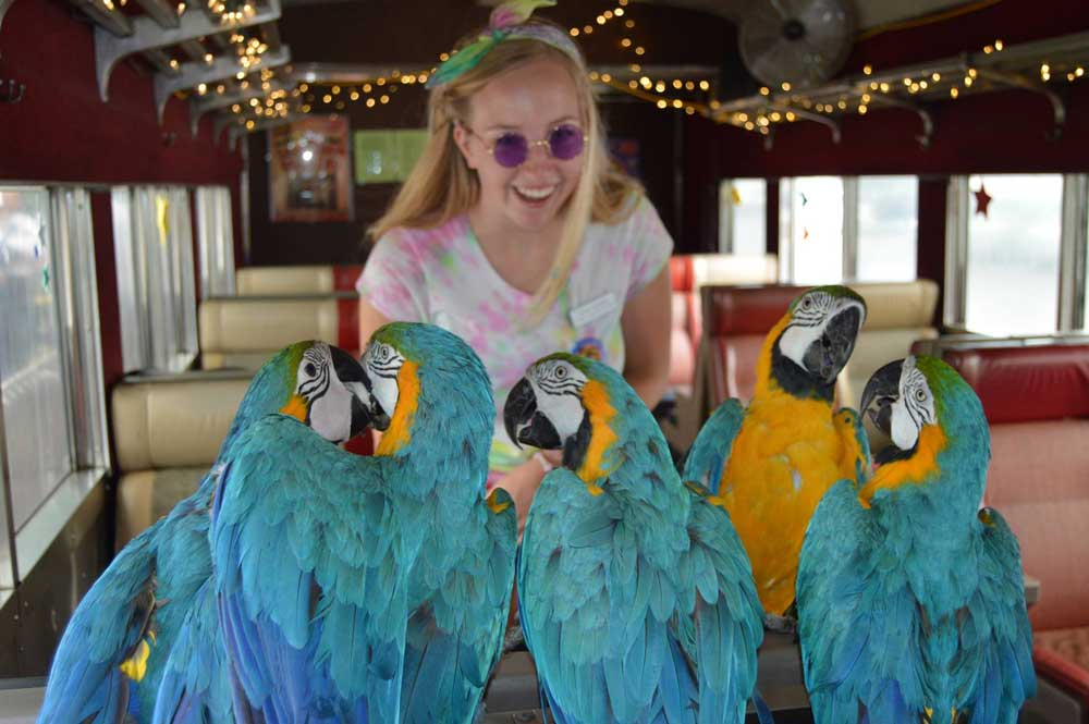 girl in round purple glasses smiling at parrots on train